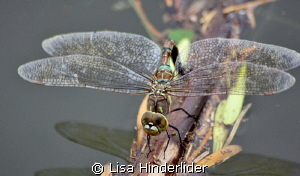 Dragonfly detail- SMILE! by Lisa Hinderlider
